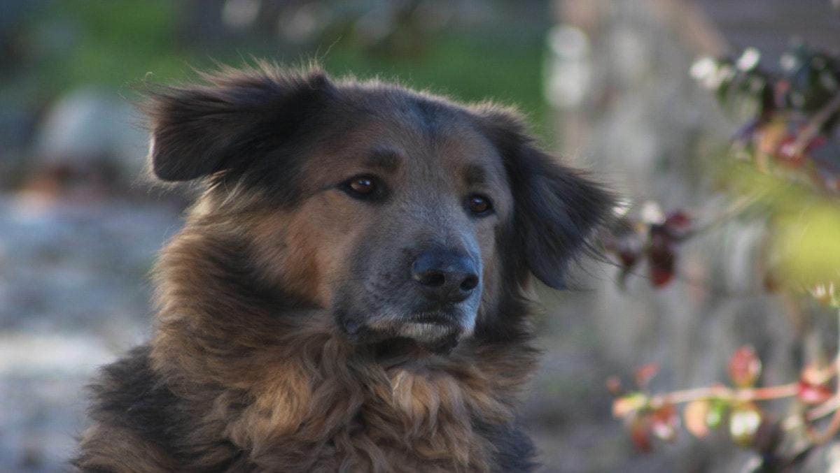 Ferienwohnung mit Hund in Umbrien