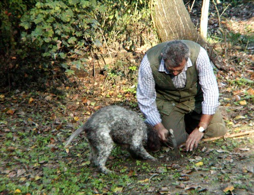 Truffle hunt in Umbria