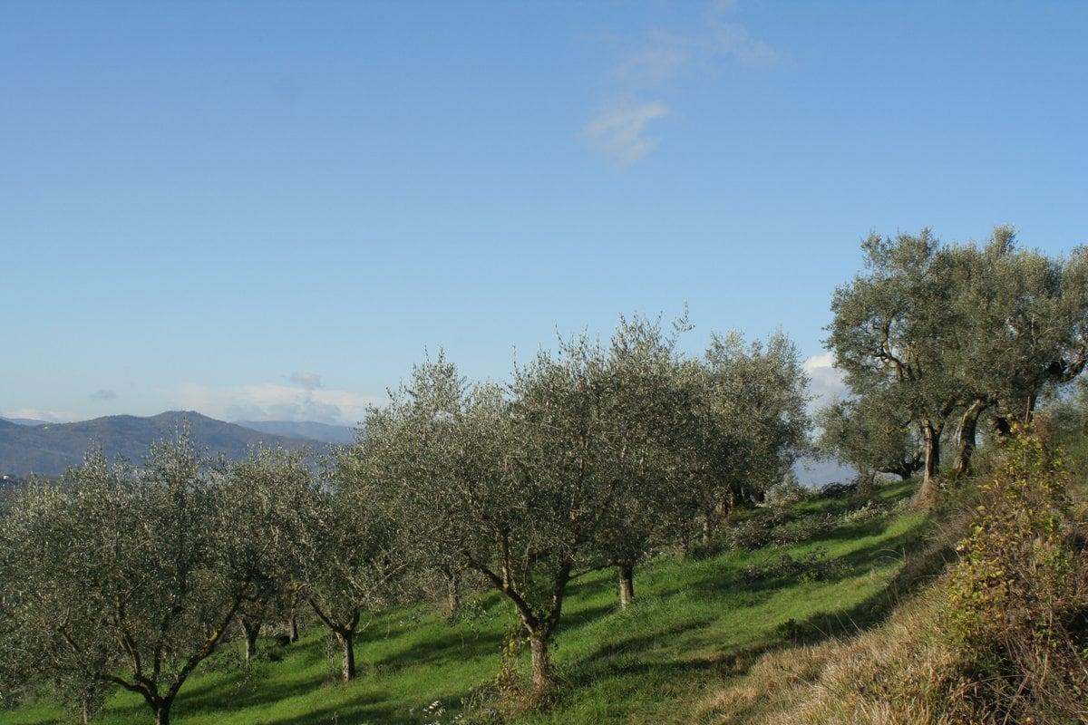 Circular Walk Umbria Montone